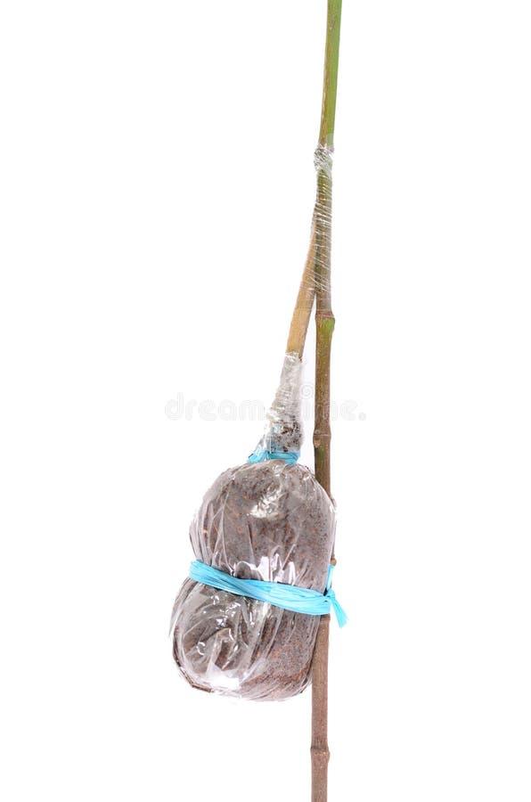 Plant Grafting and budding