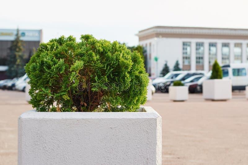 Plant green bush at city square. Urban landscape design. Plant green bush on city square. Urban landscape design royalty free stock images