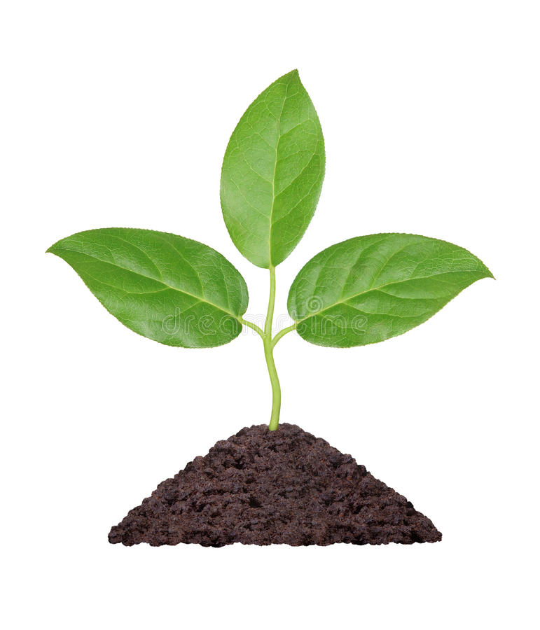 Plant with green leaves and handful of earth royalty free stock photography