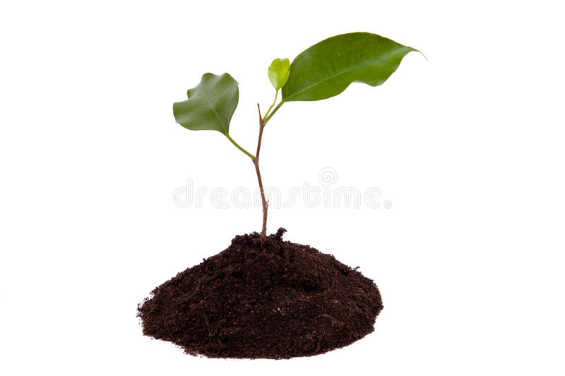 Plant with green leaves, and land stock photos