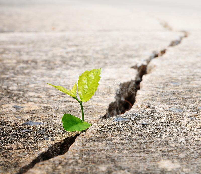 Plant grow on street. Ecology concept royalty free stock photography