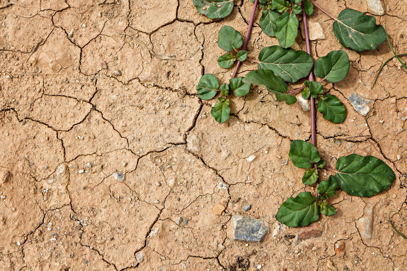 Plant grow up on cracked ground royalty free stock photo