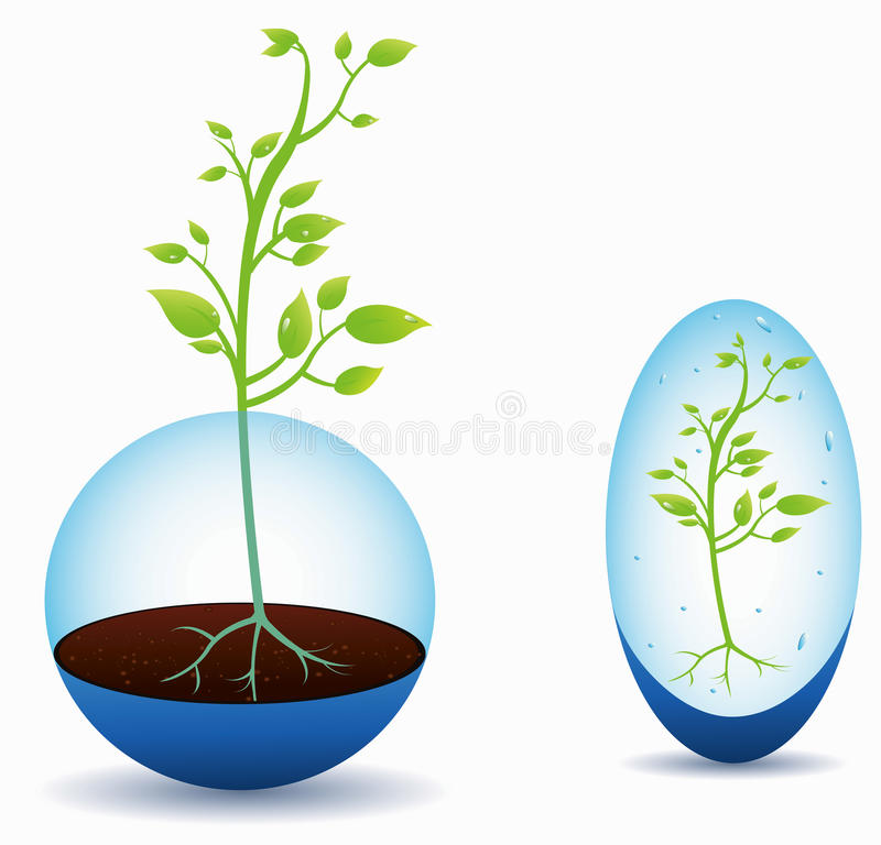 Download Plant growing stock vector. Image of glass, blossom, plant - 17871878