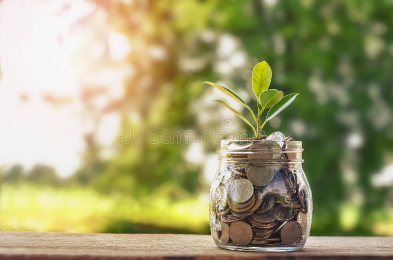 Plant growing on Coins glass jar and concept money saving stock image