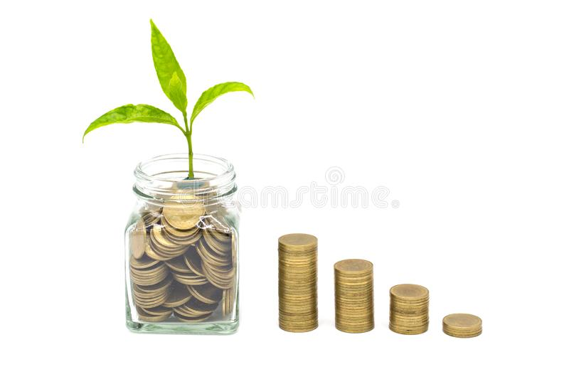 Plant growing in Coins glass jar with isolated on white background,  money saving and investment financial concept, growth through. Saving plans and investment royalty free stock photography