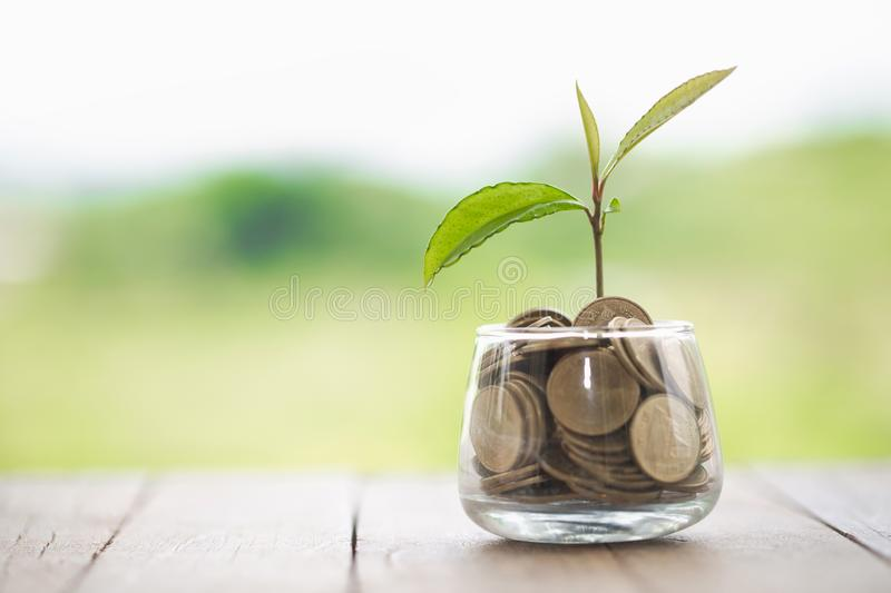 Plant growing in Coins glass jar for money saving and investment financial, concept for business, innovation, growth and money royalty free stock image