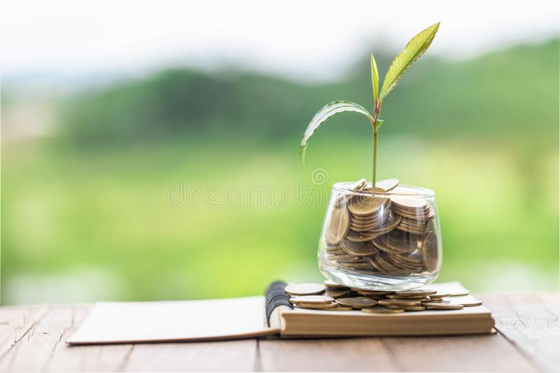 Plant growing in Coins glass jar for money saving and investment financial, concept for business, innovation, growth and money royalty free stock images