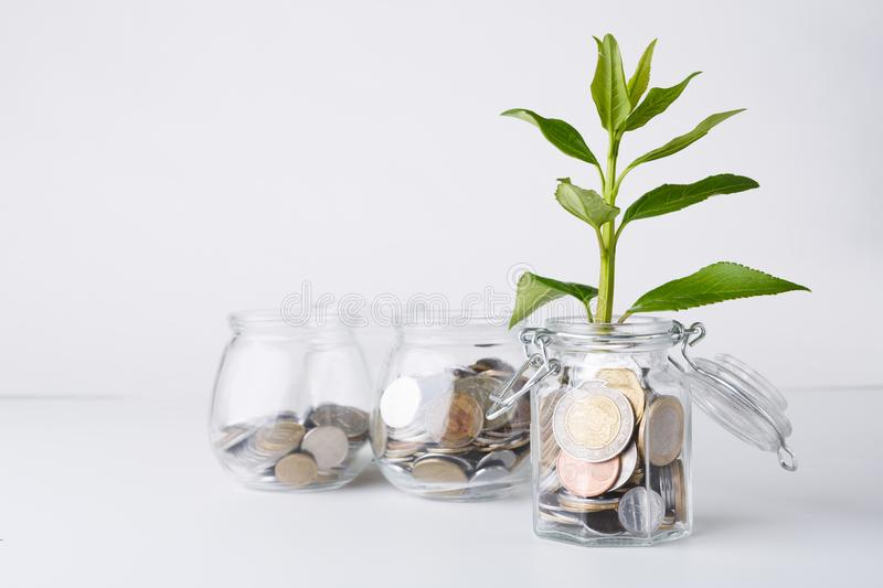 Plant growing on coins in glass jar stock images