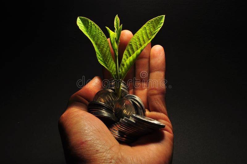 Plant growing on coins. Hand holding coin. Saving money and investment concept stock photography