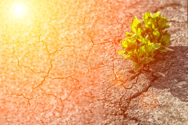 plant growing on crack street, soft focus, blank text stock images