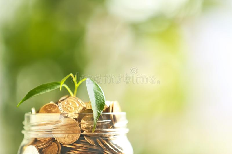 Plant growing from glass jar with coins against blurred background, closeup. Concept of savings stock photos