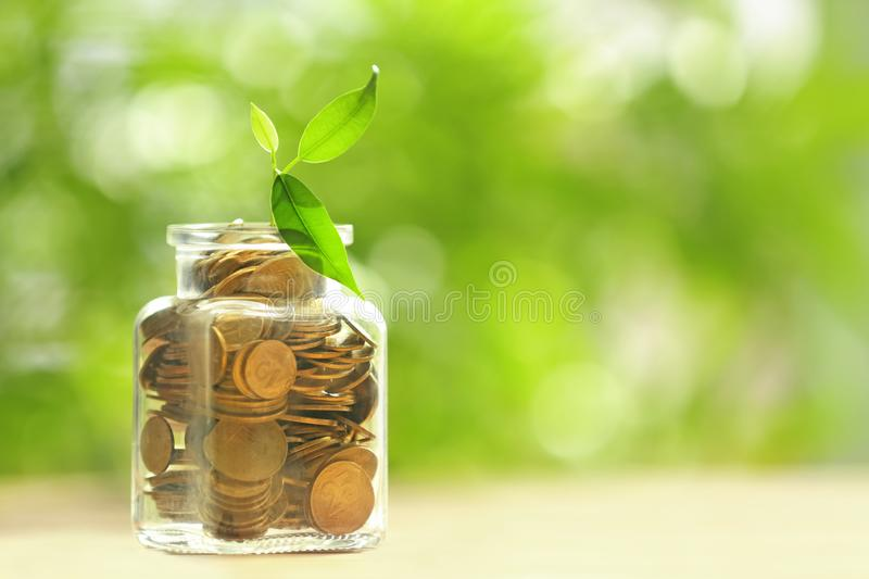 Plant growing from glass jar with coins on table against blurred background. Concept of savings stock photography