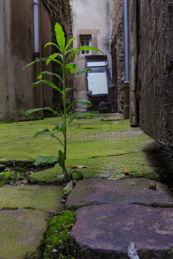 Plant growing on the ground stock photo