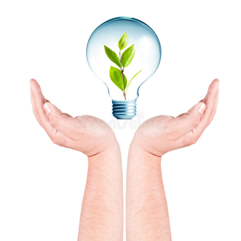 Download Plant Growing Inside The Light Bulb On Hands Stock Image - Image of ecology, glass: 20761127