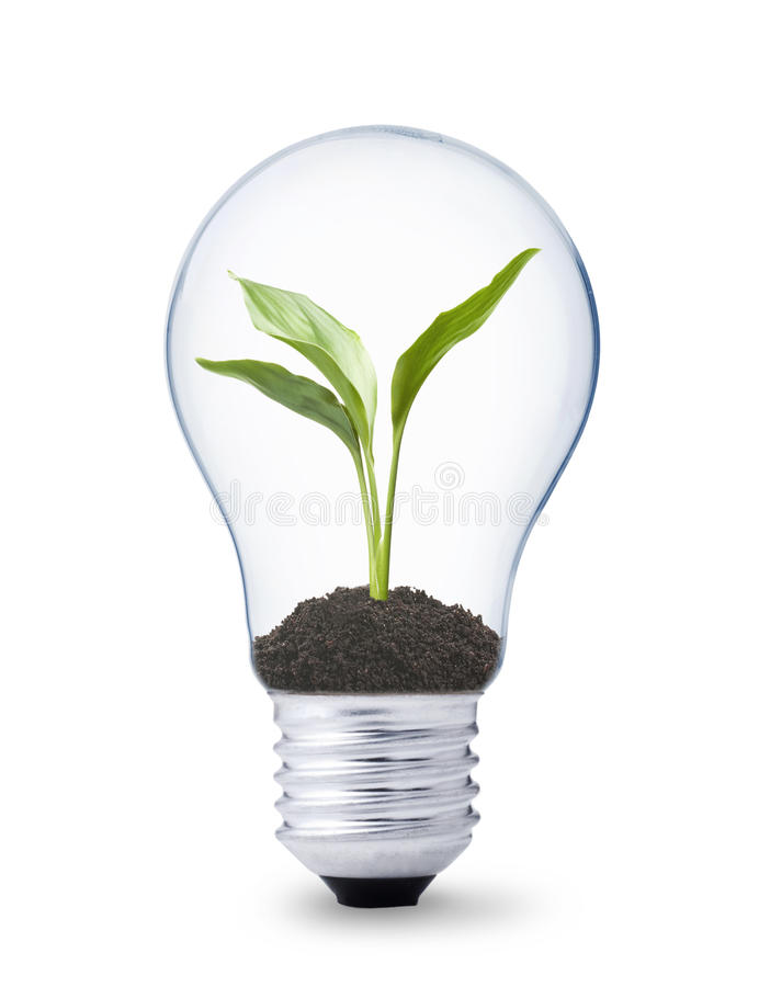 Download Plant Growing Inside A Lightbulb Stock Photo - Image of electricity, plant: 9804040