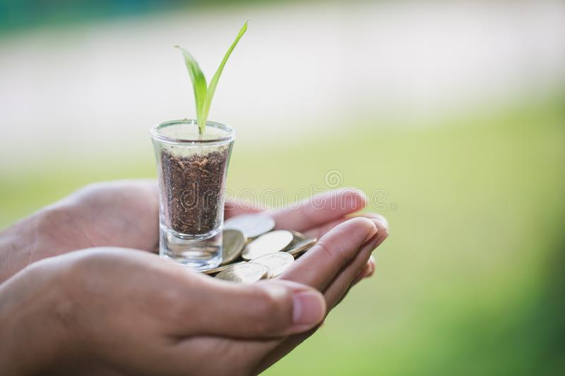 Plant growing from money coins in the glass jar held by a man`s hands, business and financial metaphor concept stock photo