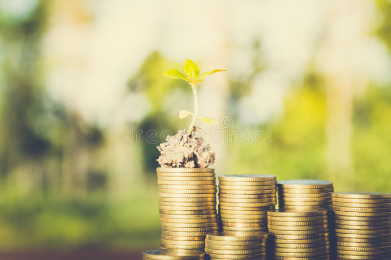 Plant growing out of coins royalty free stock images