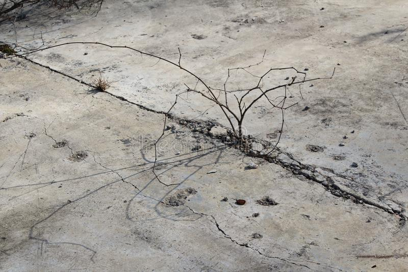 Plant growing out of concrete. royalty free stock photos