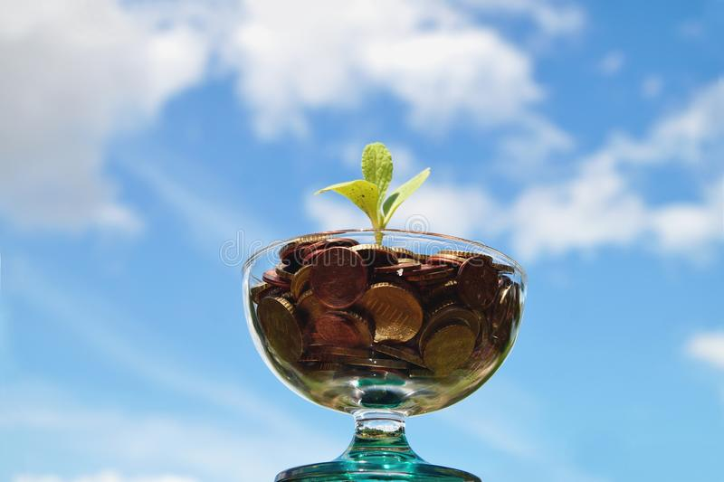 Plant growing out of pile of euro coins on the sky background. plant growing from coin jar. Investing to green business. royalty free stock photography