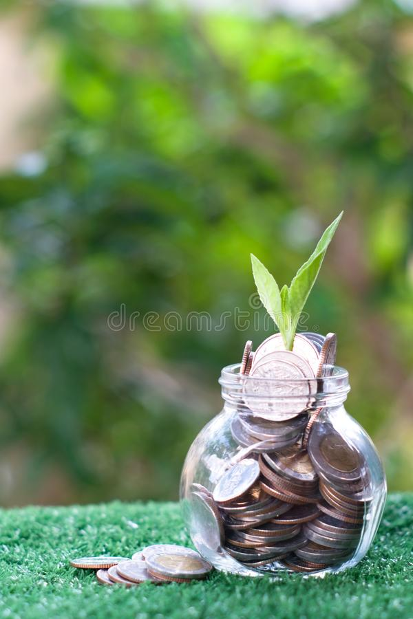 Plant growing from pile of coins. Savings and investment concept stock images