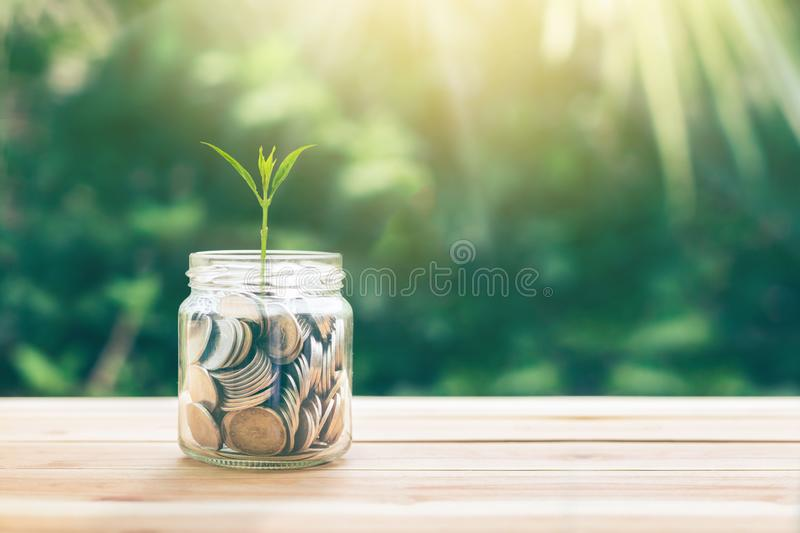 Plant Growing In Savings Coins Sprout growing on glass piggy bank with sunset light. Planning savings money of coins concept for property, mortgage and royalty free stock photography
