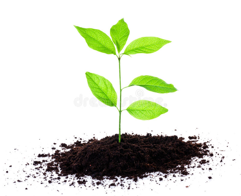 Plant growing in soil royalty free stock photos