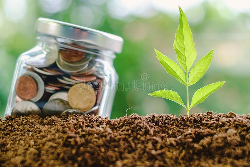 Plant growing from soil with coin in the glass jar against blurred natural green background stock photography