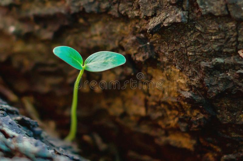Plant growing on tree royalty free stock image