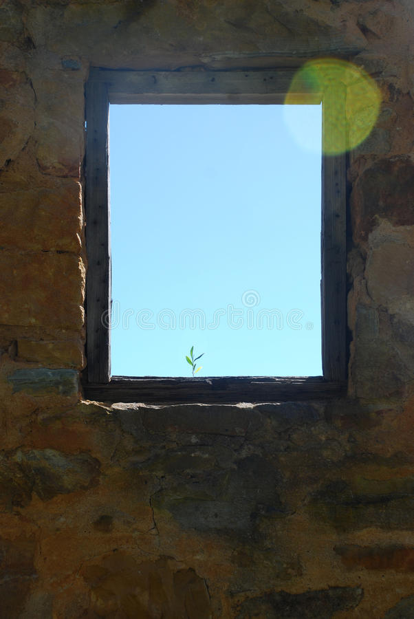 Plant and window frame. Plant growing through the window of runis royalty free stock images