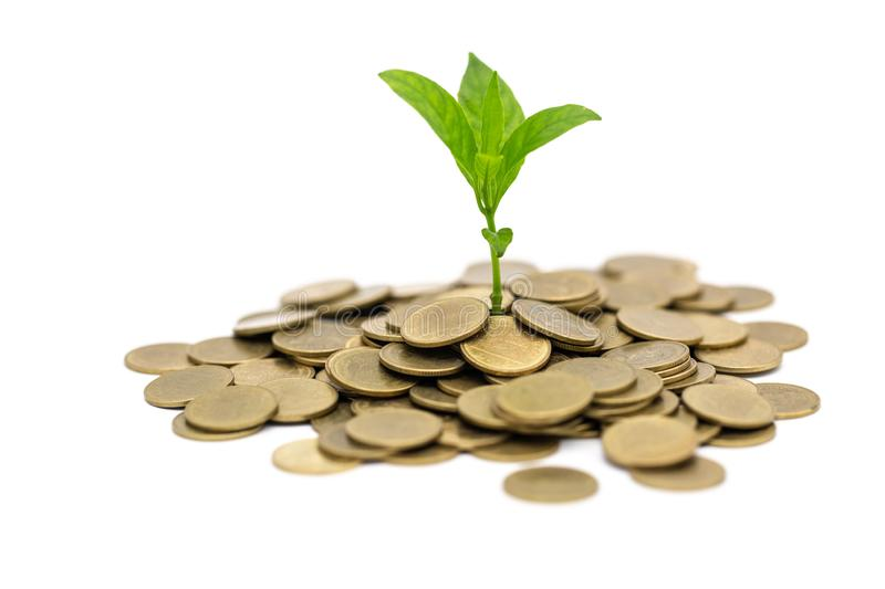 Plant that grows on the gold coin with isolated on white background, money saving and investment financial concept, growth through stock photography