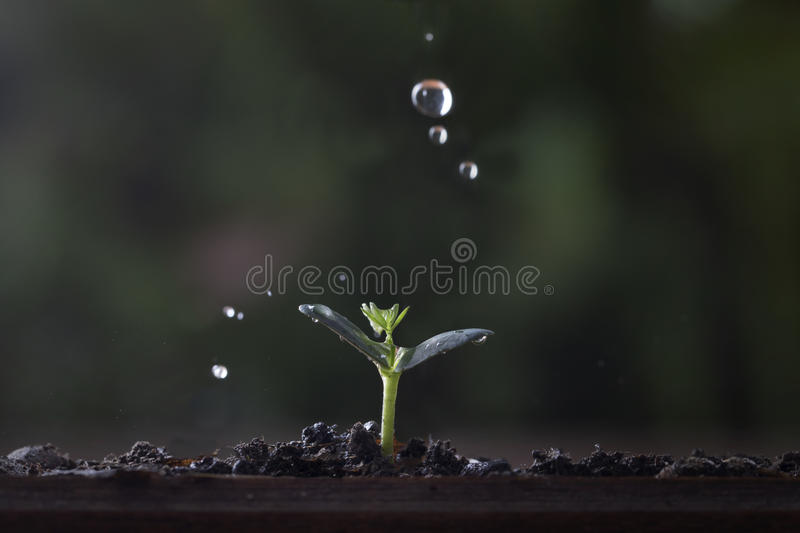 Plant growth from seed tree. Plant growth from seed tree in nature background stock photography
