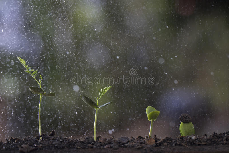 Plant growth from seed tree in nature background. stock images