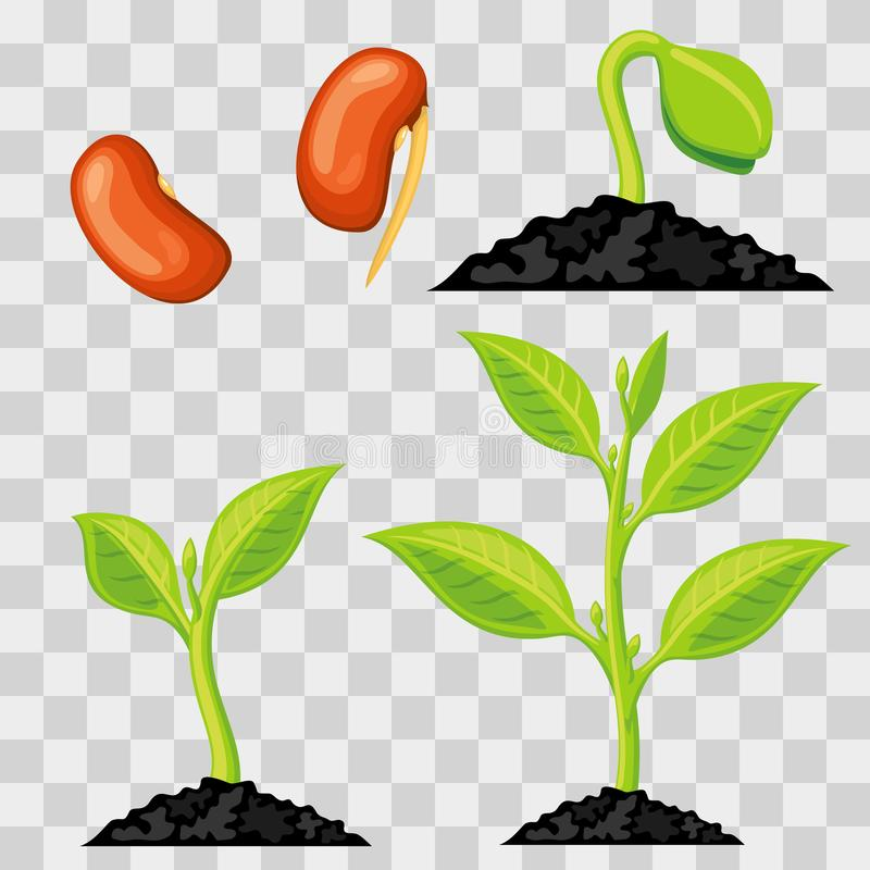 Download Plant Growth Stages From Seed To Sprout Stock Vector