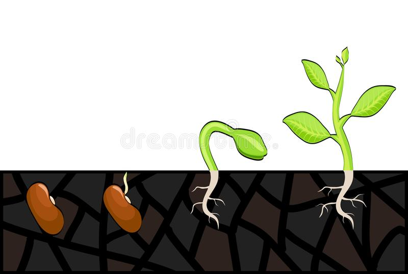 Plant growth stages from seed to sprout. Vector illustration, eps 10 stock illustration
