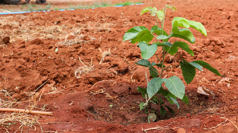 Plant growth royalty free stock photography