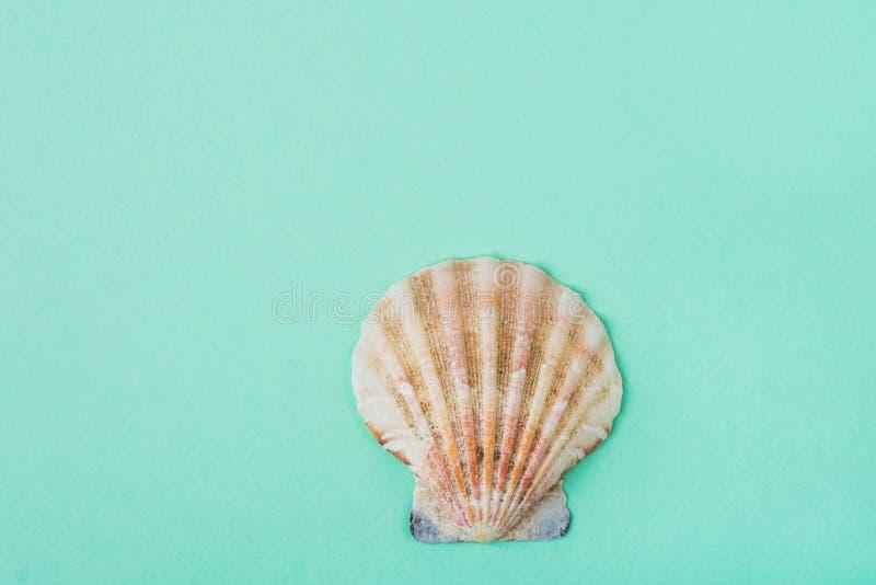 Plant halvt cirkelhav Shell för singel på turkosbakgrund Minimalist modern stil Skraj moderiktiga färger rengöringsduk för univer royaltyfri foto
