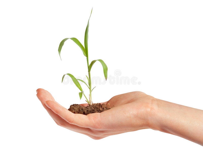 Plant in hand stock photography