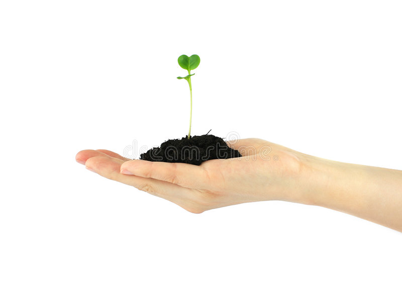 Download Plant in hand stock image. Image of fragile, care, black - 5091201