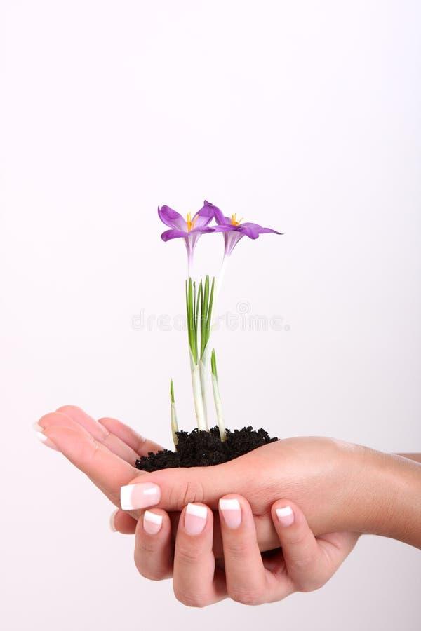 Plant in hand vector illustration