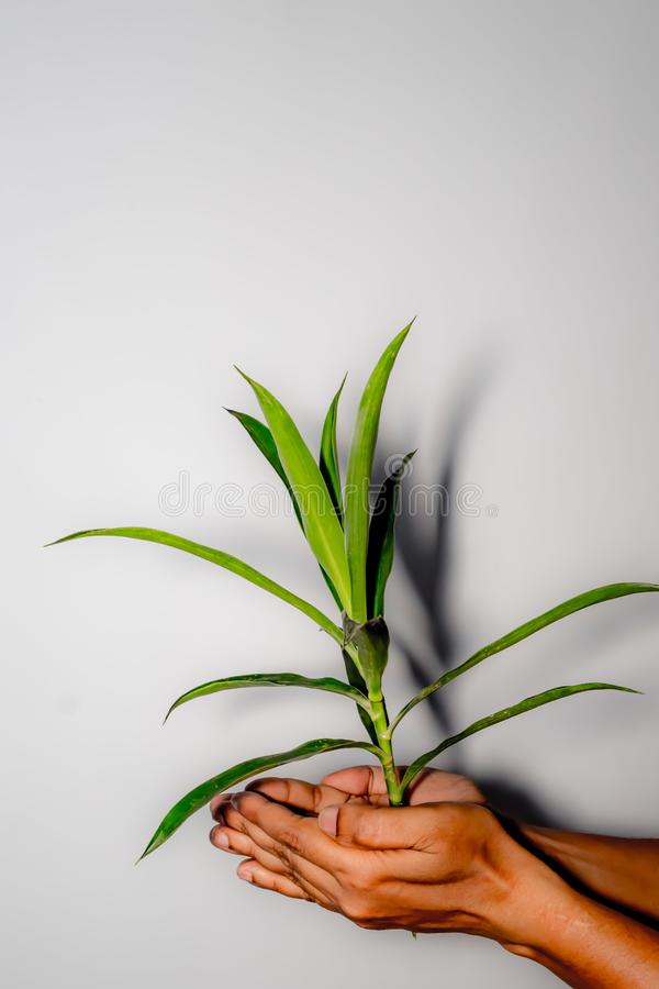 Plant in hand close up royalty free stock photography