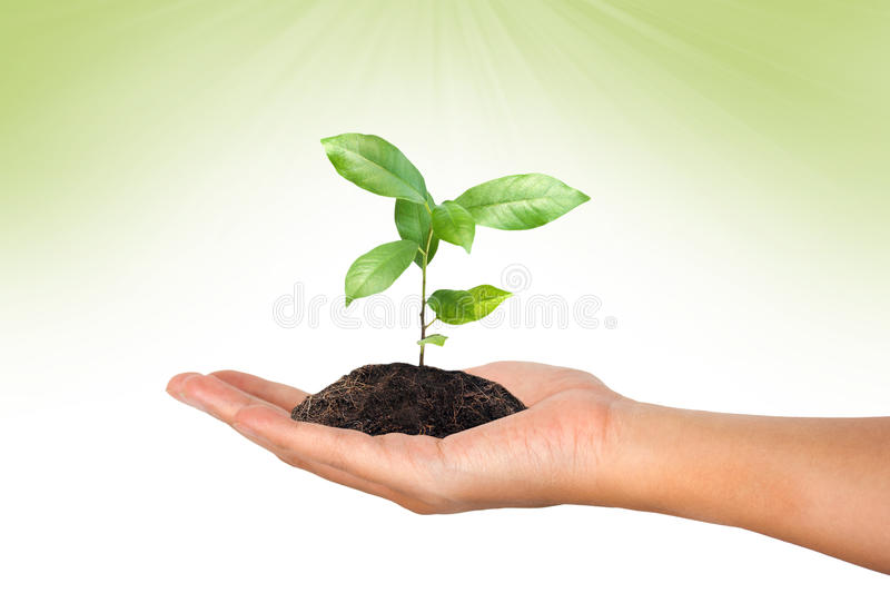 Plant in the hand on green stock photos