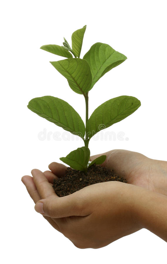 Plant on hand royalty free stock photography