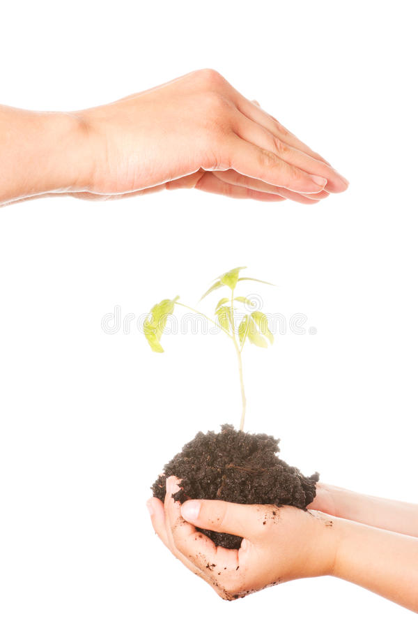 Download Plant in hands stock image. Image of holding, child, growing - 25377695