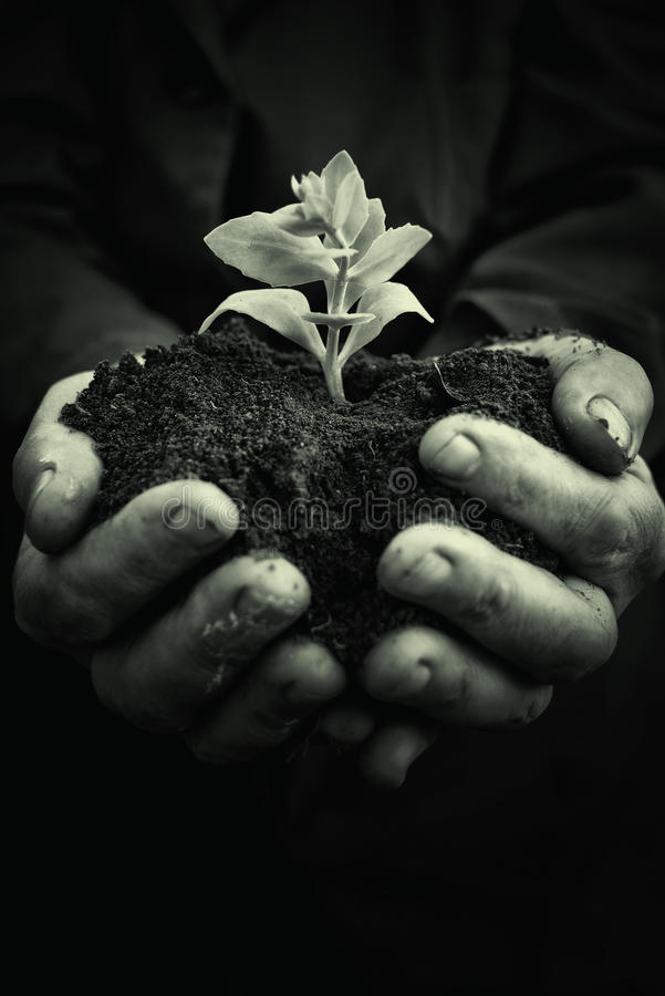 Plant in hands of agricultural worker royalty free stock photography