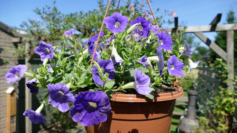 Plant in a hanging basket royalty free stock photos