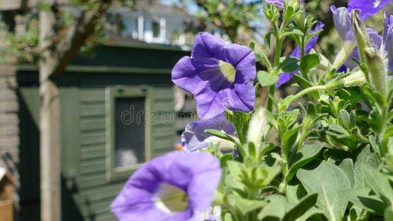 Plant in a hanging basket stock photography