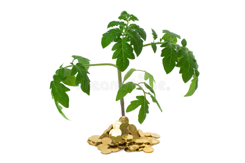 Plant in heap of coins royalty free stock photography