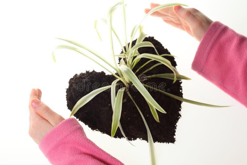 Plant heart stock photos