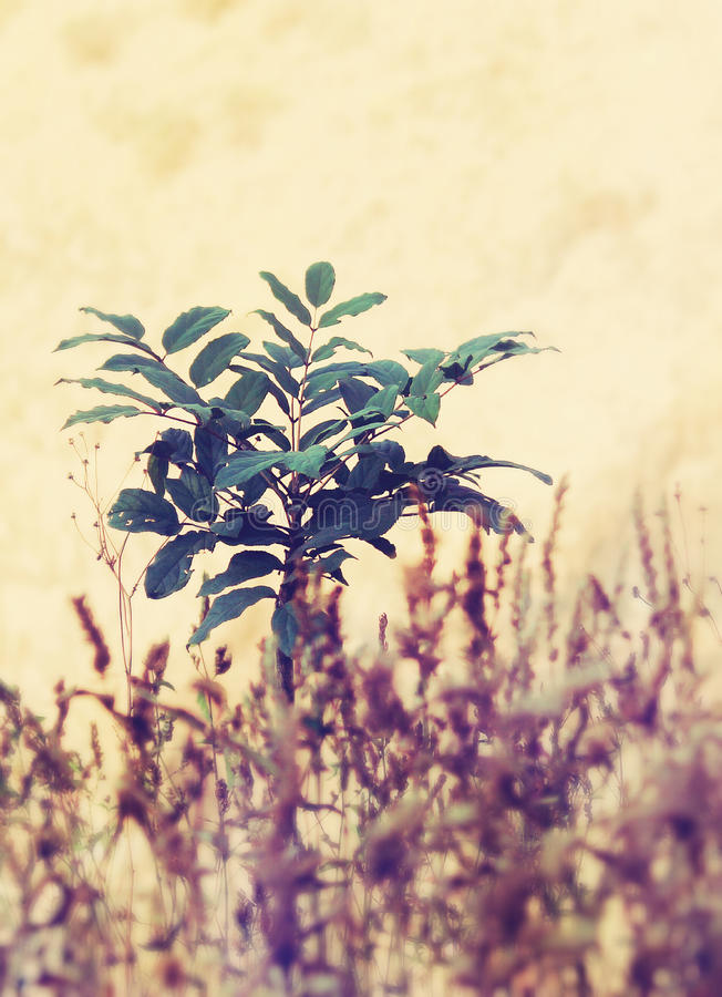 Plant. I click this picture in Mumbai stock images