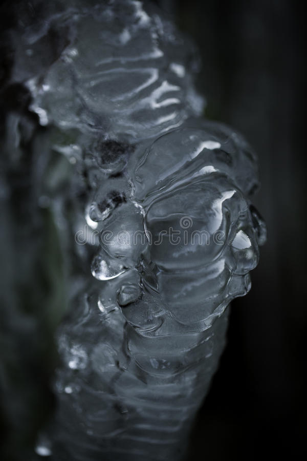 Plant with Ice royalty free stock photo